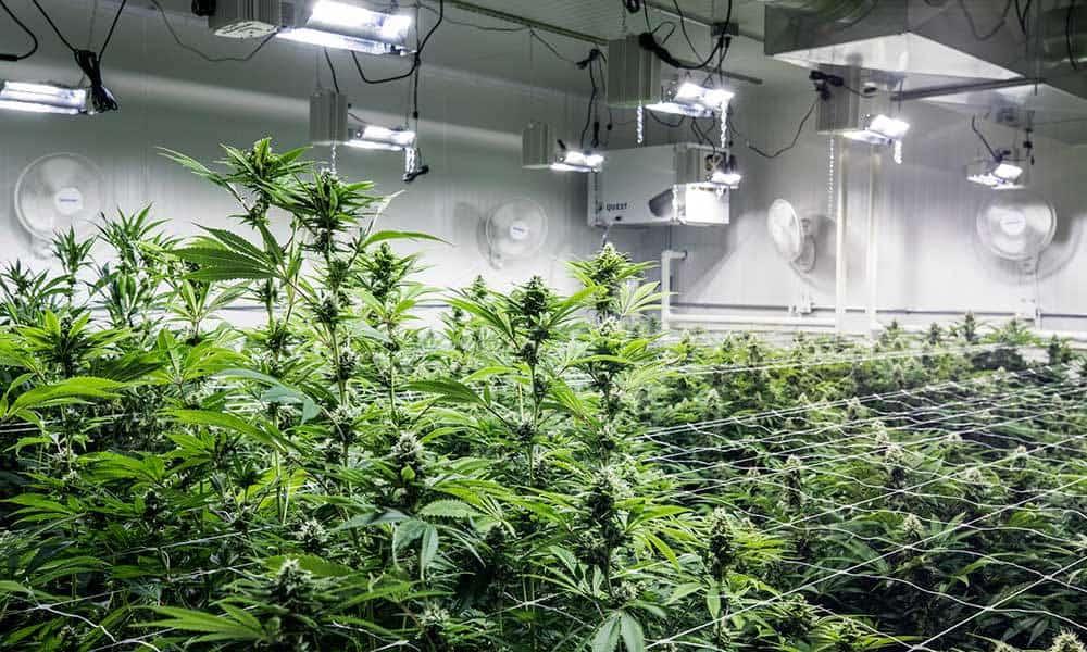 industrial-grow-rooms
