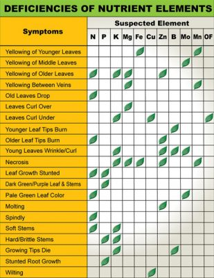 nutrient-deficiency-chart