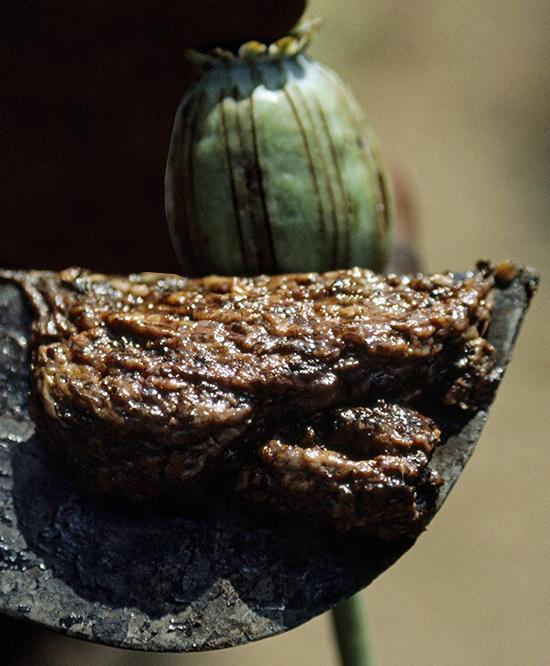 Opium Pod Scraping
