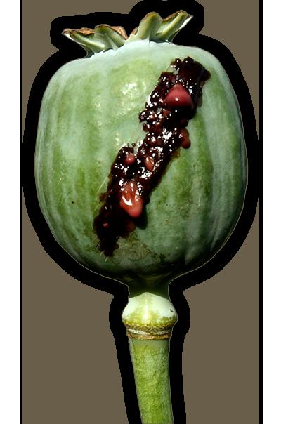 Opium Pod