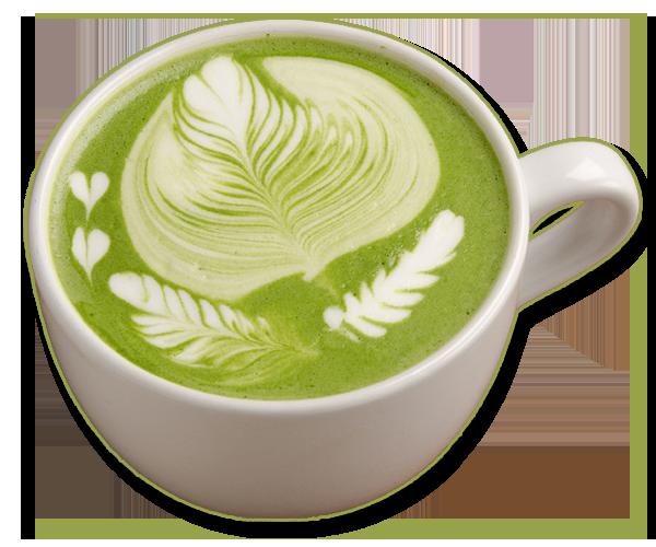 trichocereus-tea